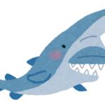 ミツクリザメの歯の特徴や本数は!?