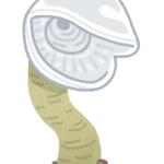 オオグチボヤの生態について!何を食べるの!?