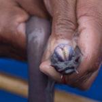 深海に生息するヌタウナギの生態について!