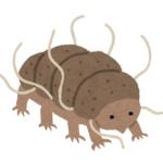 深海生物クマムシの大きさや特徴について!