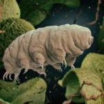 クマムシの繁殖方法や時期について!